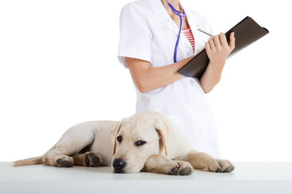 Капельница для собаки