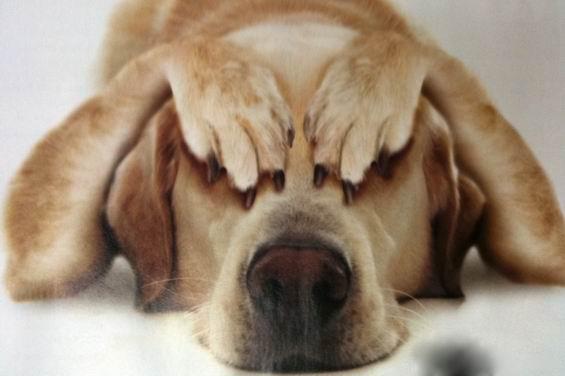 Собака, которая не боится петард