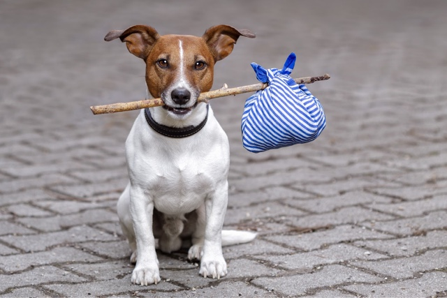 Может ли собака сама найти дорогу домой