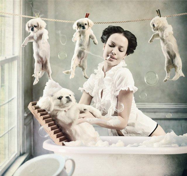 помыть лапы собаке