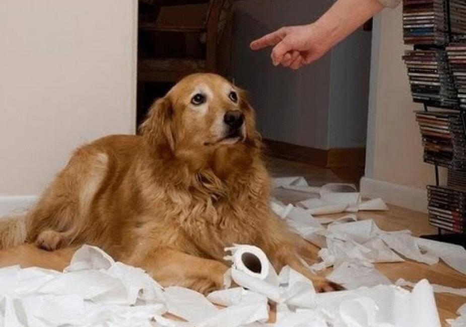 Наказание для собаки