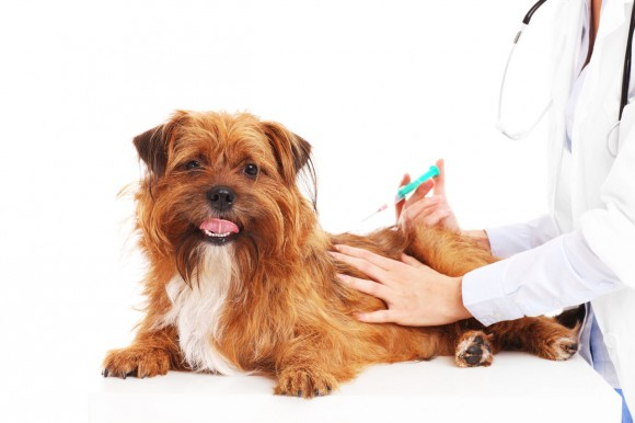 Прививки для собаки