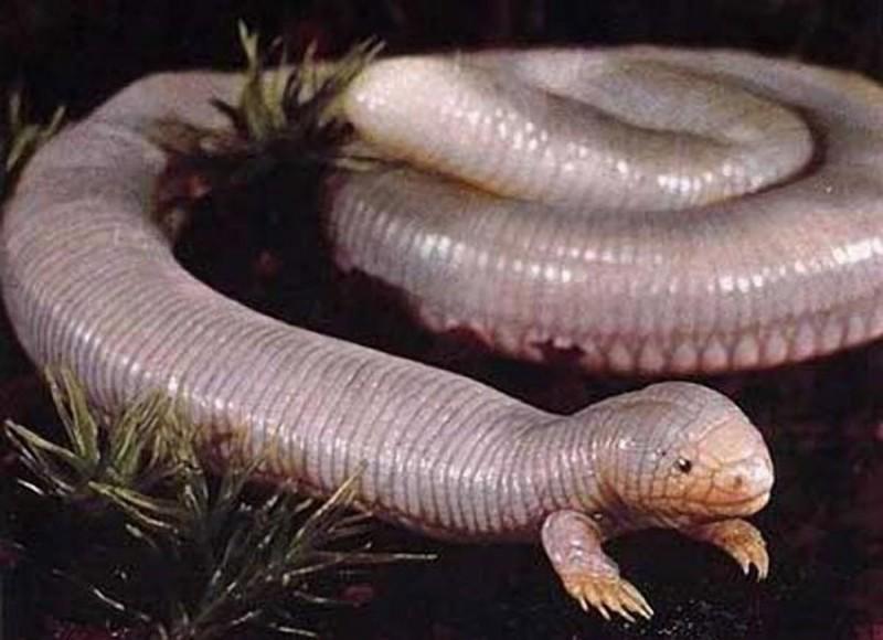 Раньше у змей были ноги