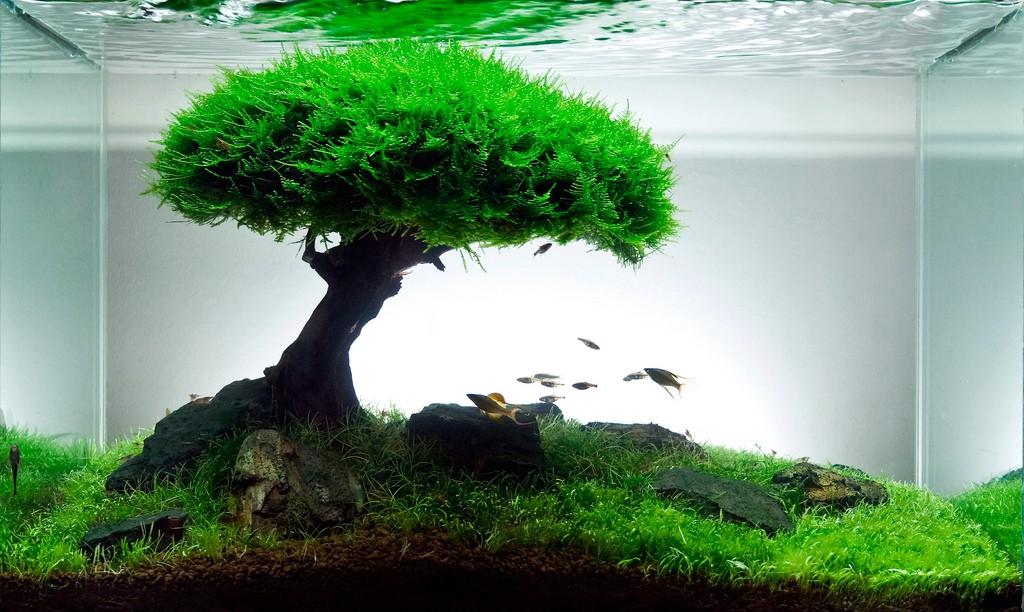 дерево в аквариуме