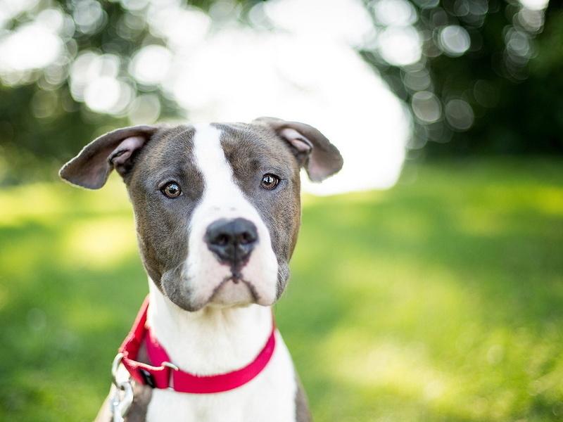 картинки собак на рабочий стол красивые № 434246 бесплатно