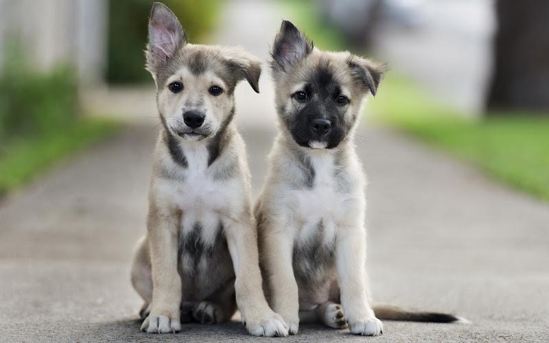 Обучение щенков