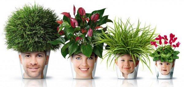 необычные горшки для комнатных растений
