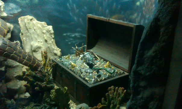 сундук в аквариум
