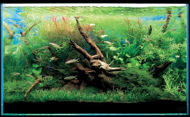 коряги в аквариум