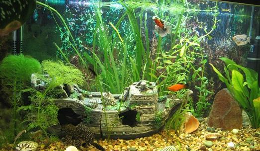 как можно украсить аквариум