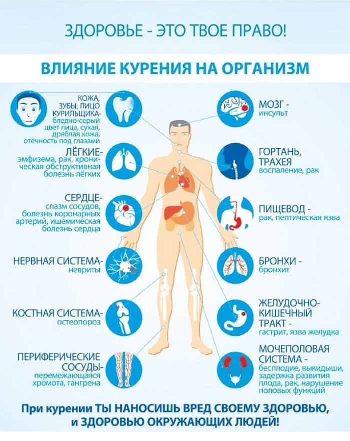 vliyanie-organizm